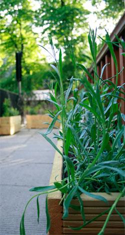 Somerton House new planters